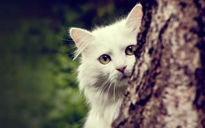 White-Animals (18)