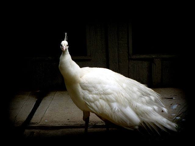 White-Animals (2)
