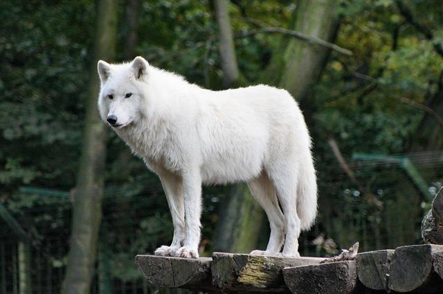 White-Animals (21)