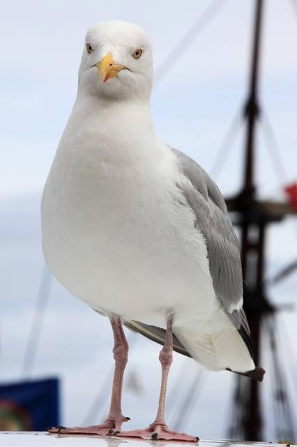 White-Animals (3)