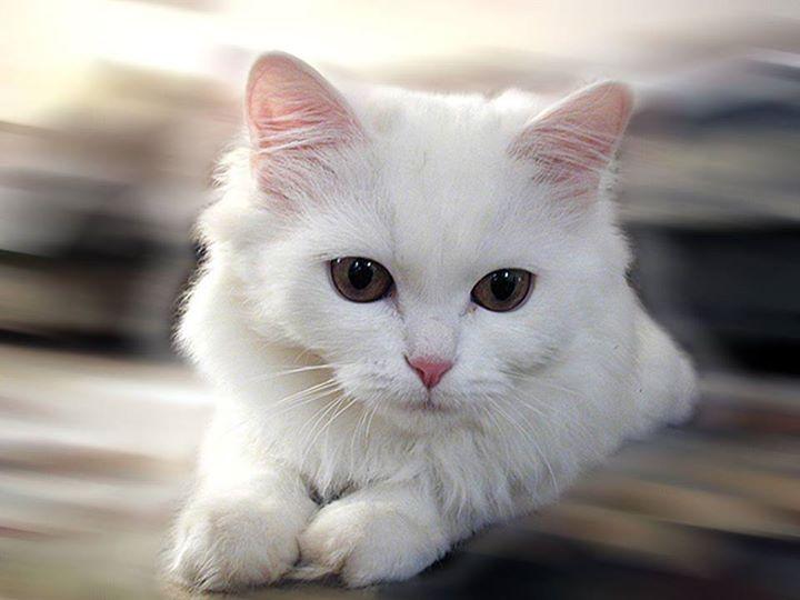 White-Animals (4)