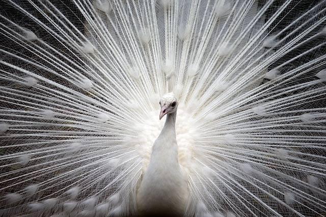 White-Animals (6)