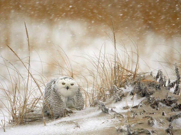 Wild-Life-Animal (33)