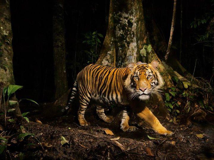 Wild-Life-Animal (37)