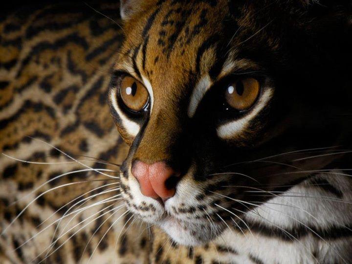 Wild-Life-Animal (41)