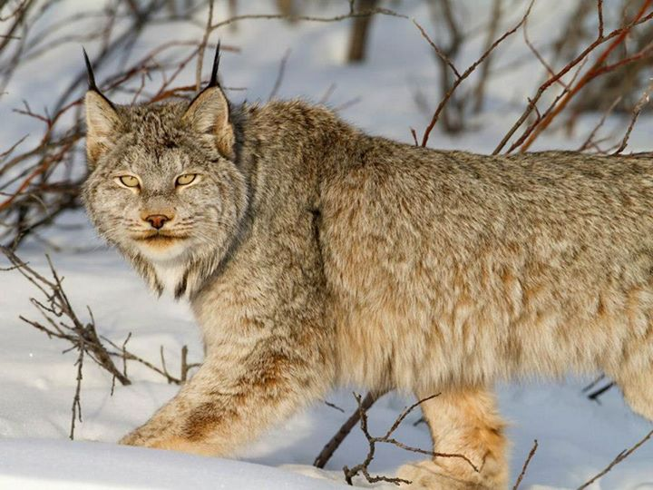 Wild-Life-Animal (42)
