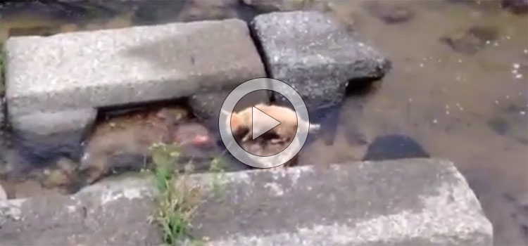 So Cute… Dog Plays Fetch by Himself (Video)