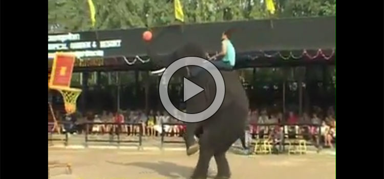 Elephants Got Talent – Amazing Performance (Video)