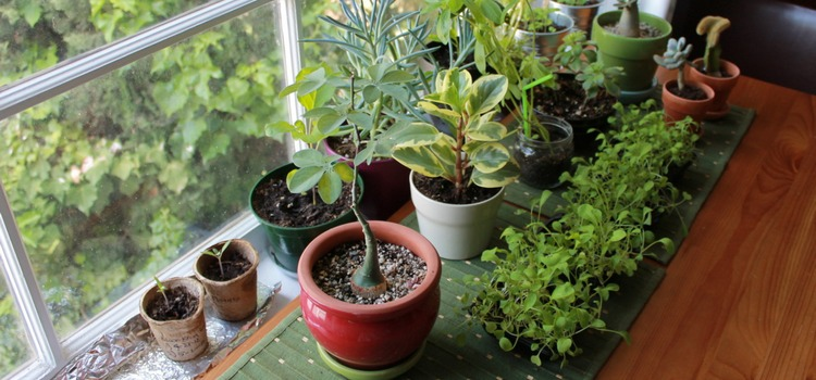 15 House Plants for Improving Indoor Air Quality