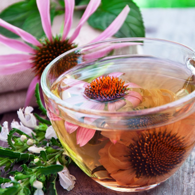 013Echinacea-tea