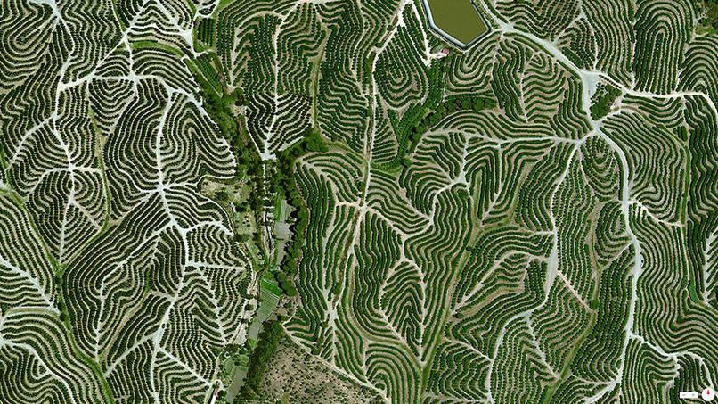 Vineyards, Huelva, Spain Satalite Images