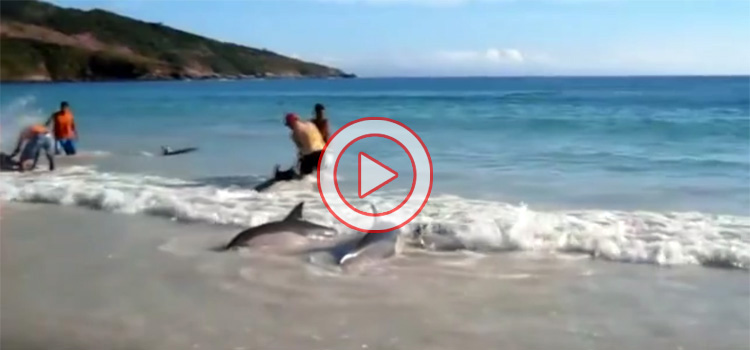 Restore Your Faith in Humanity (Video)