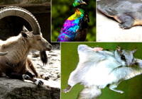 Some Exotic Animals You Won't Believe Exist In Pakistan