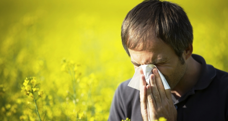 03Facts_HayFever_InfoMazzaDotCom