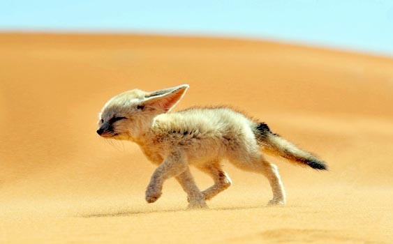 Animals of the Desert (with Photos)