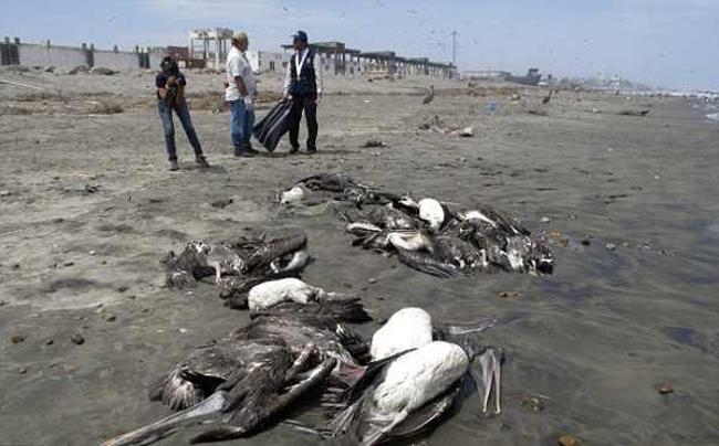 4. Bird Suicide Grounds of Jatinga