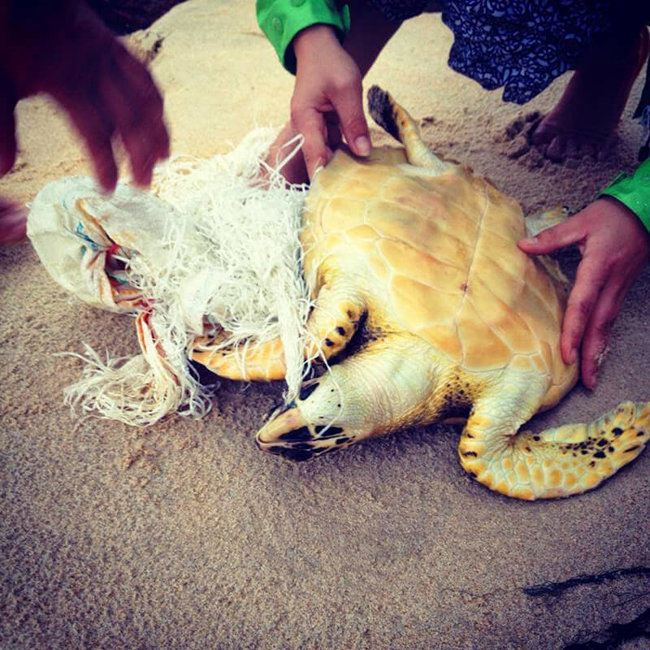 Men release a turtle entangled in a net