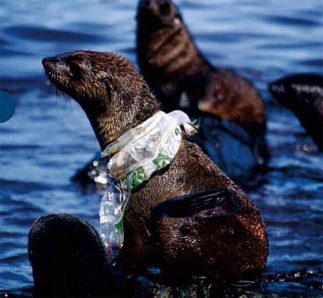 Seal can not get rid of a plastic bag