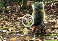 'Vampire' Squirrel Caught on Film for 1st Time in National Park, Jakarta (Video)