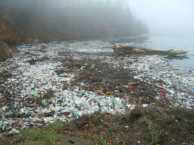 Waste accumulating on the shore of a lake