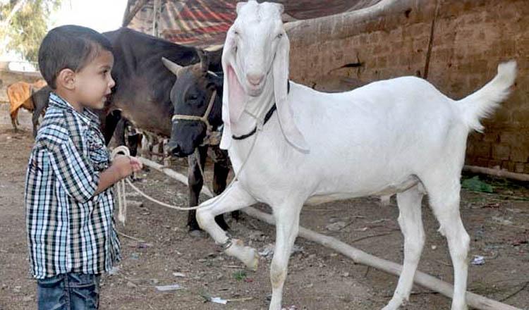Eid-Ul-Azha-Goat