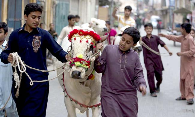 Pakistani children escort their animals bought ahead of Eid al-Adha in Rawalpindi, Pakistan, Monday, Sept. 21, 2015. Eid al-Adha, or the Feast of the Sacrifice, is celebrated to commemorate the Prophet Ibrahim's faith in being willing to sacrifice his son. (AP Photo/B.K. Bangash)